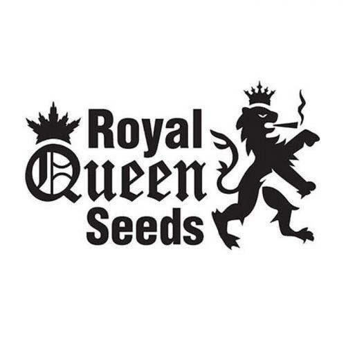 Royal Queen Zaden