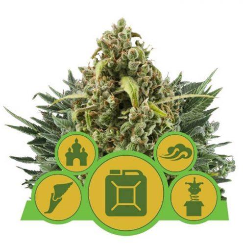 herbalspirit-autoflowering-mix