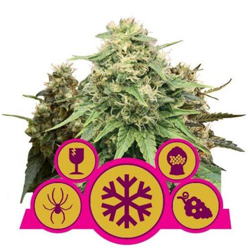 herbalspirit-gefeminiseerde-mix