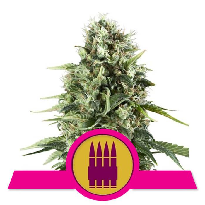 herbalspirit-royal-ak