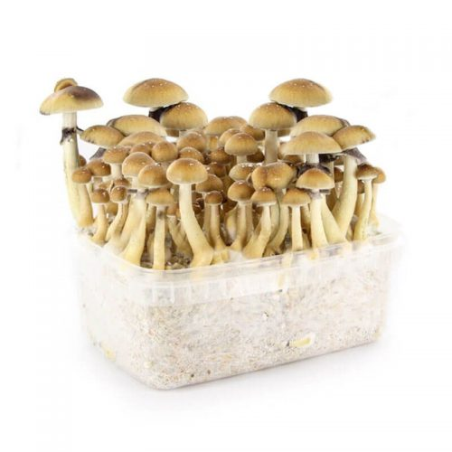 mushroom-growkits-herbal-spirit.jpg