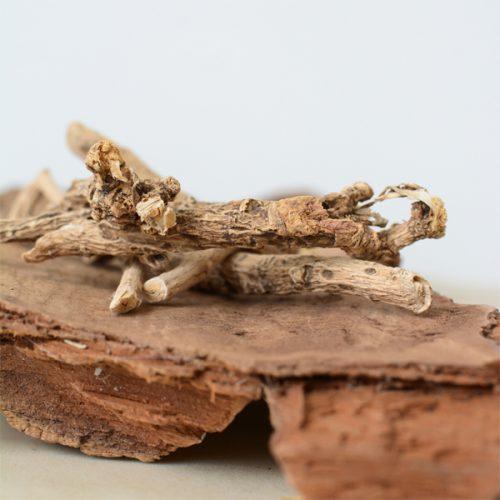 africaans droomkruid silene capensis wortel - herbal spirit