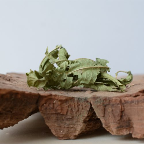 vervene Verbena officinalis bladeren - herbal spirit